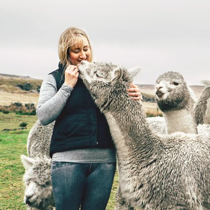 Alpacas in the British Pennines with female walking guide.